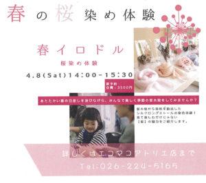 春の桜染め体験のお知らせ~エコマコ~